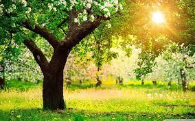 शरद ऋतुतील पंचकर्म